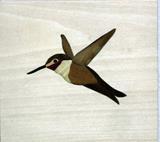 8444Hummingbird
